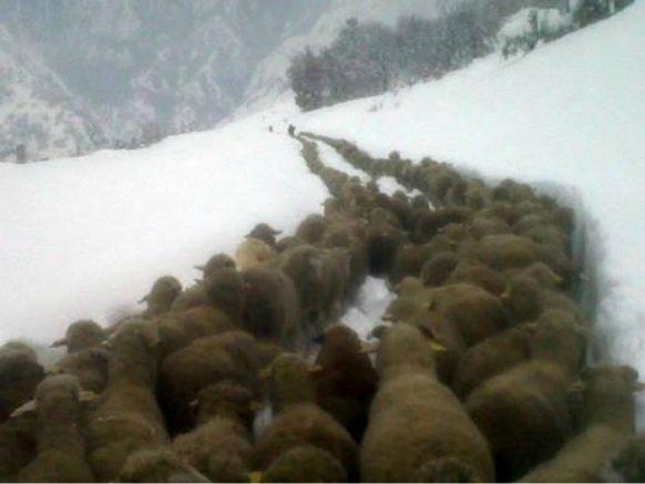 S'il vous plait, design-moi un mouton!