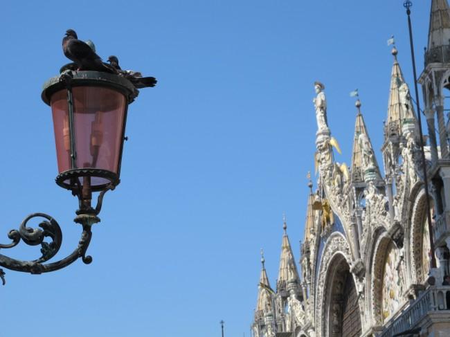 venise italie place st marc pigeons