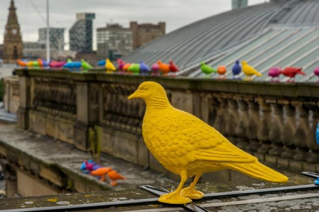 pigeons biennale liverpool