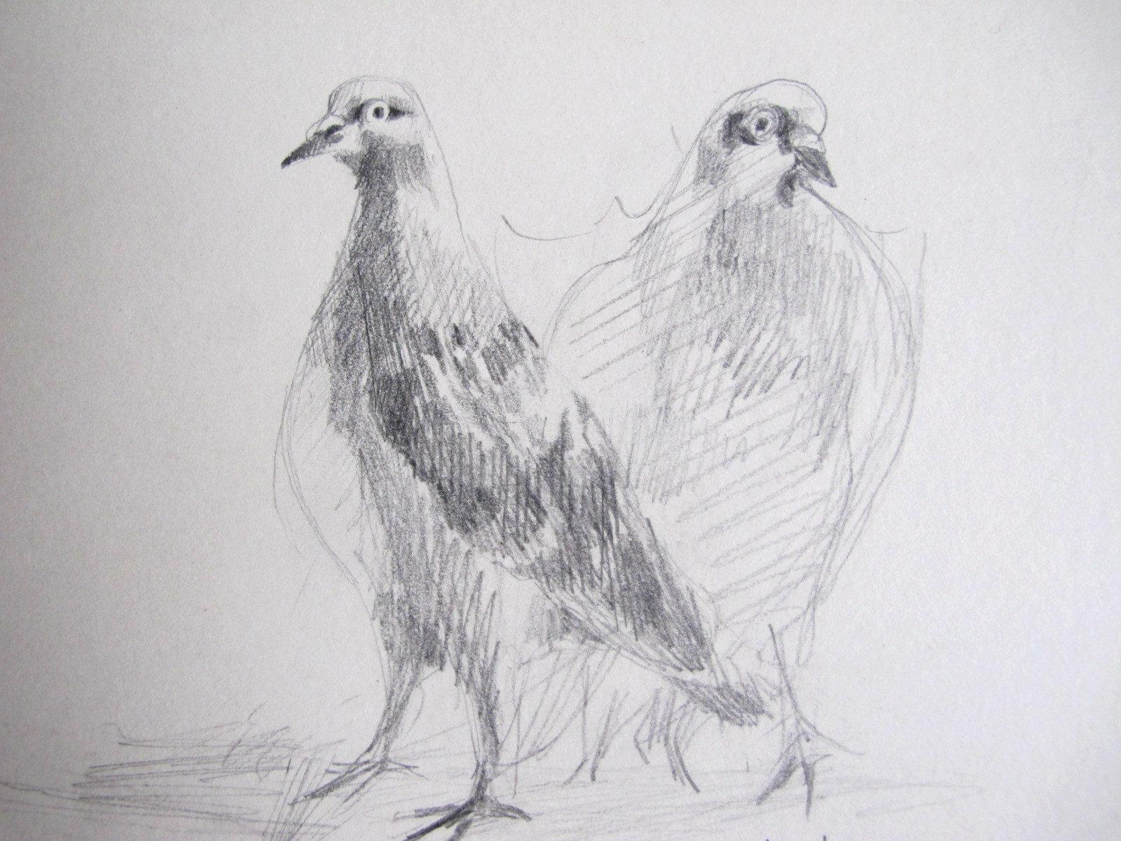 La semaine flou(e) 2, des pigeons partout!