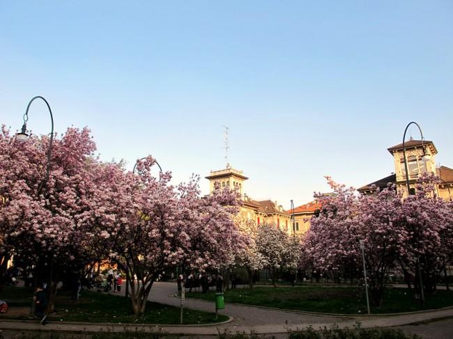 magnolias milan