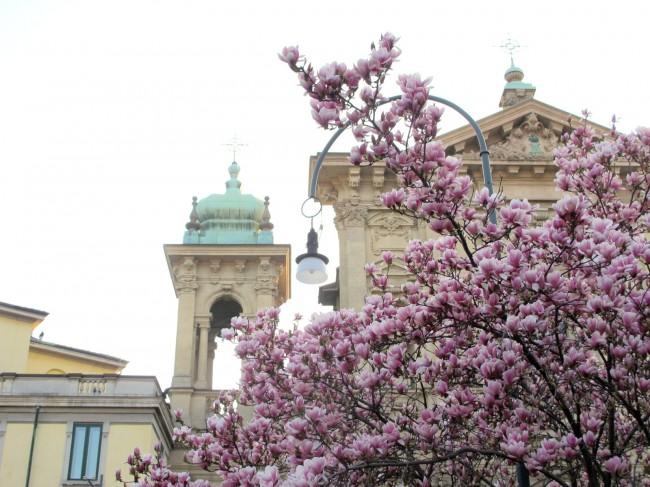 magnolia piazza tommaseo milano