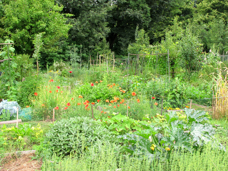 Les potagers du parc Paolo Pini, paradis des salades et des lapins ravis!