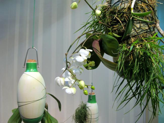 dossofiorito epiphytes