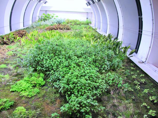 mur végétal parking perrache