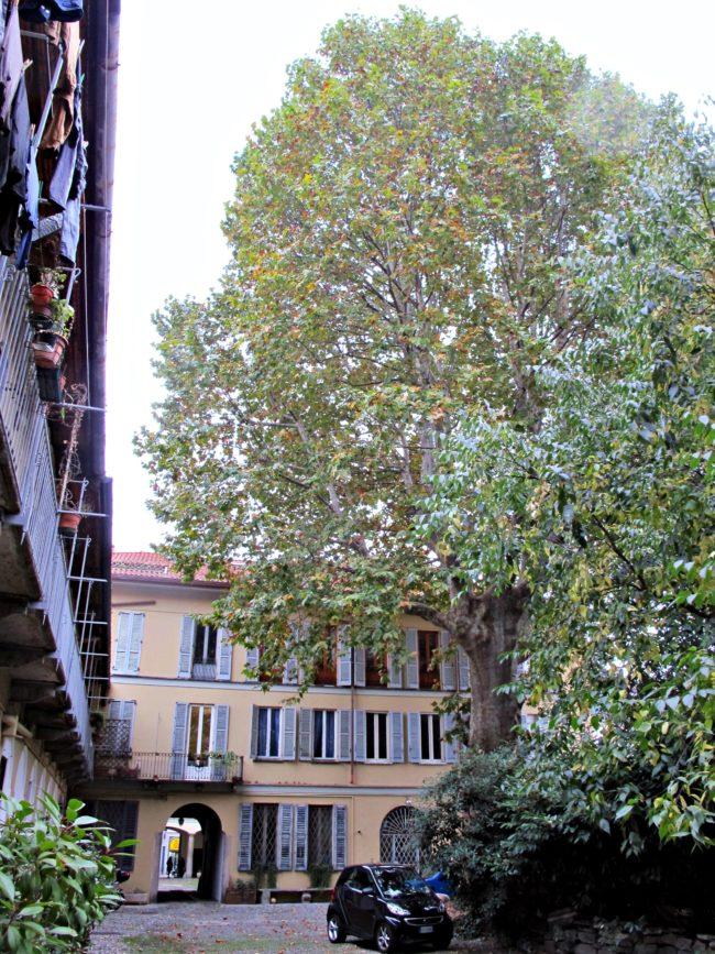 arbres milan