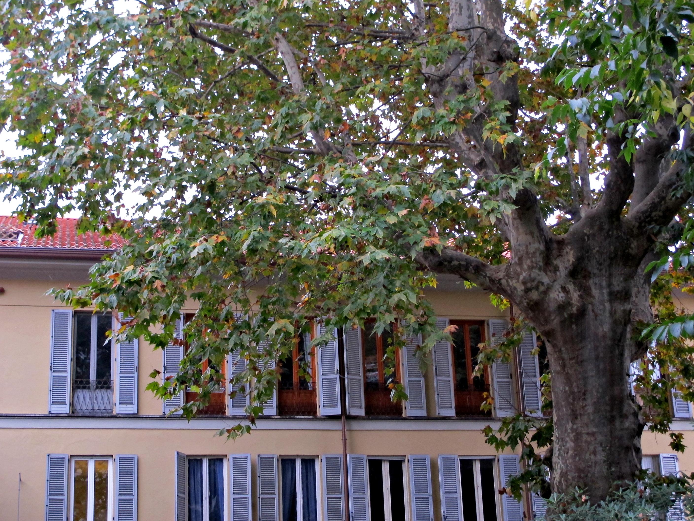 Le plus bel arbre de Milan, la suite!