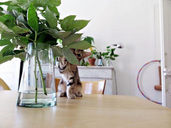 chaton et plantes