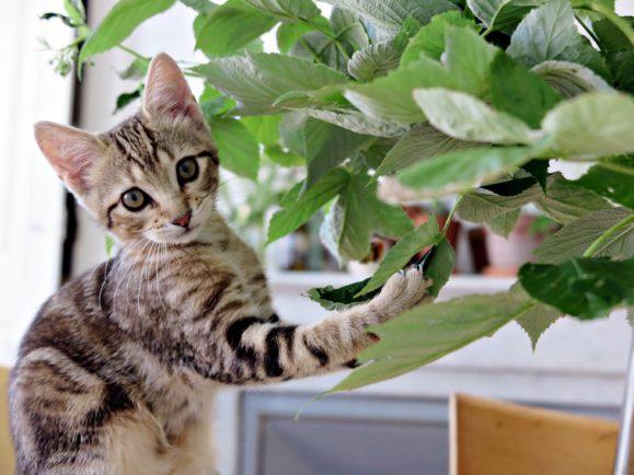 mina le chat