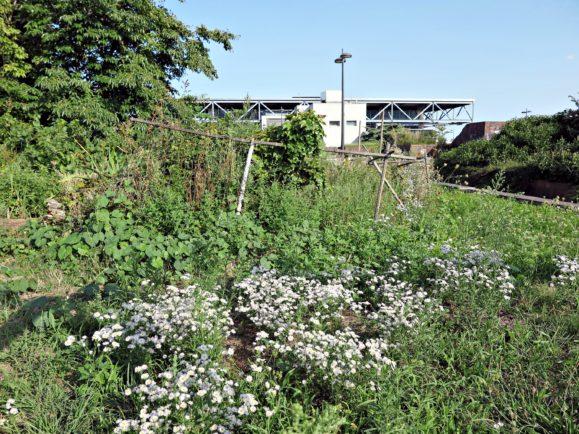 jardins partagés gare perrache