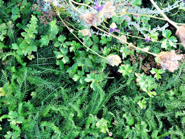 jardin partagé lyon