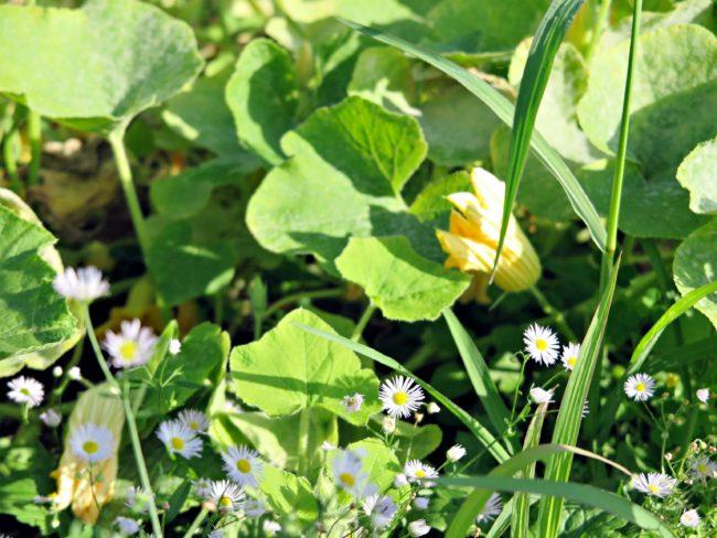 jardins suspendus perrache lyon