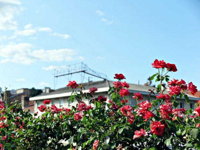 jardin toit gare lyon perrache