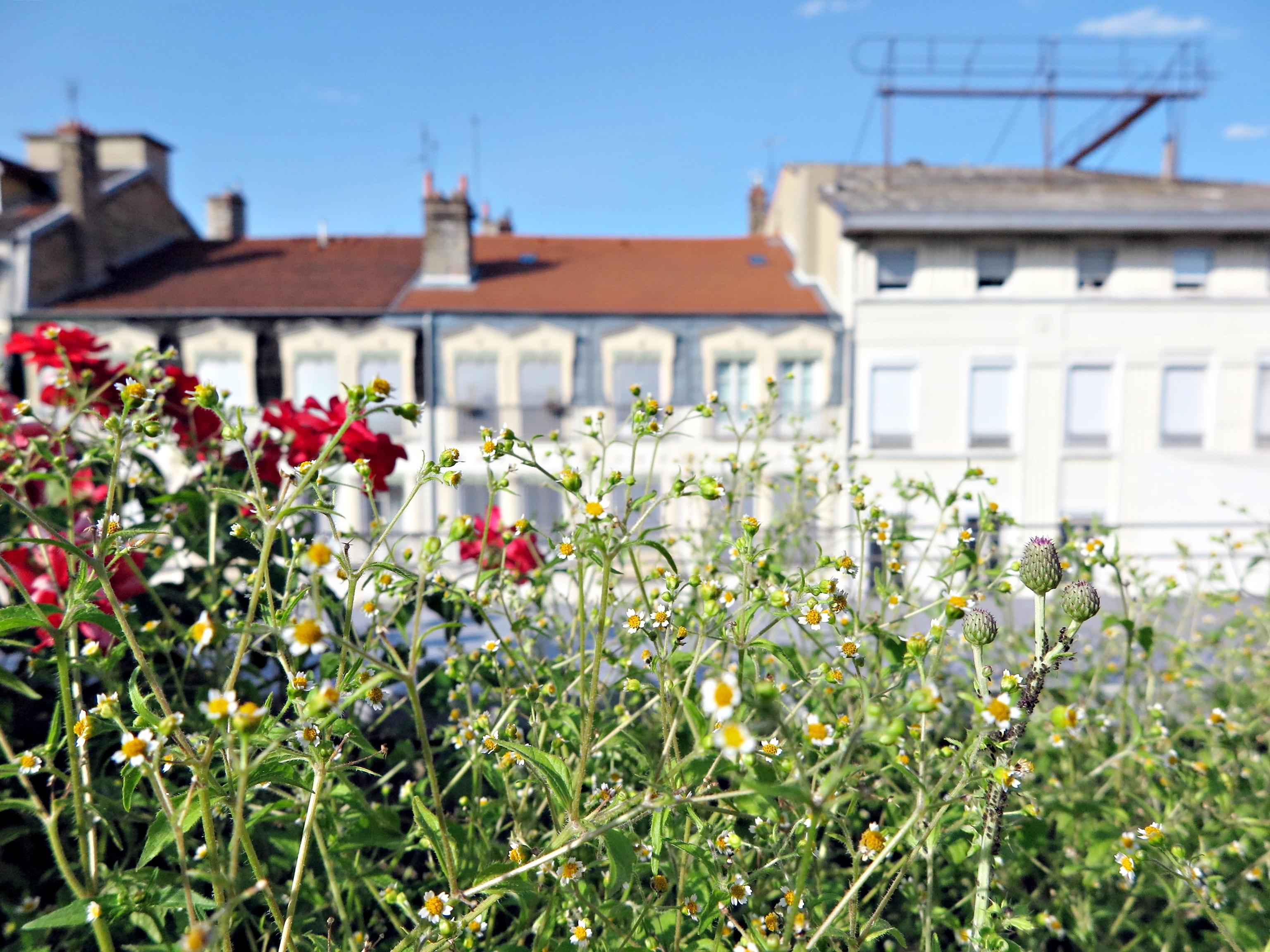 Le jardin sur le toit de la gare de Lyon Perrache