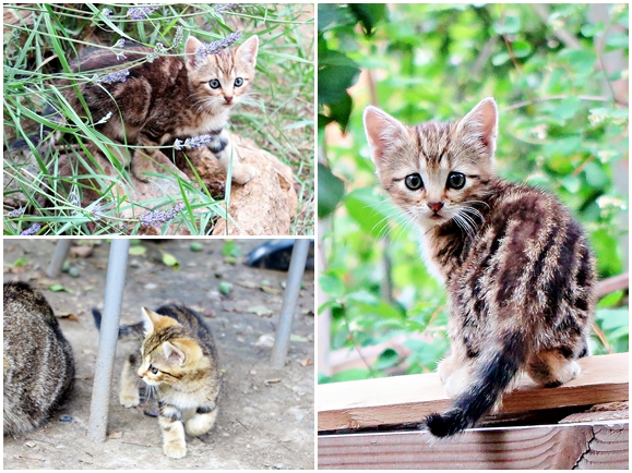 chaton jardin