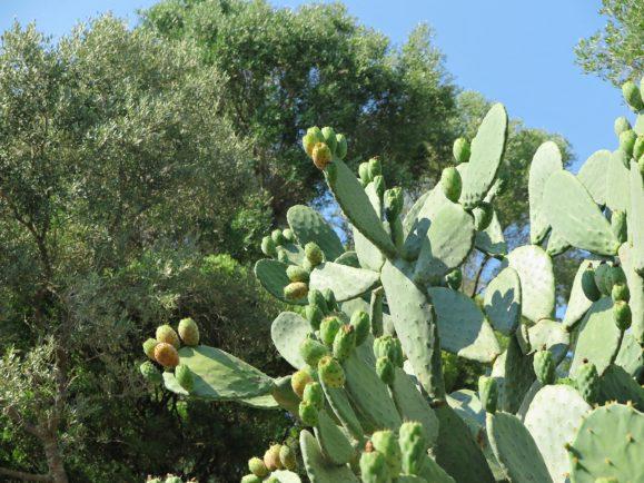 végétation madrague giens