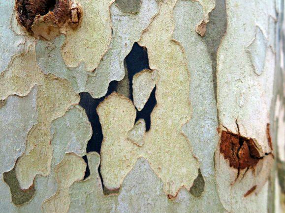 tags sur arbres
