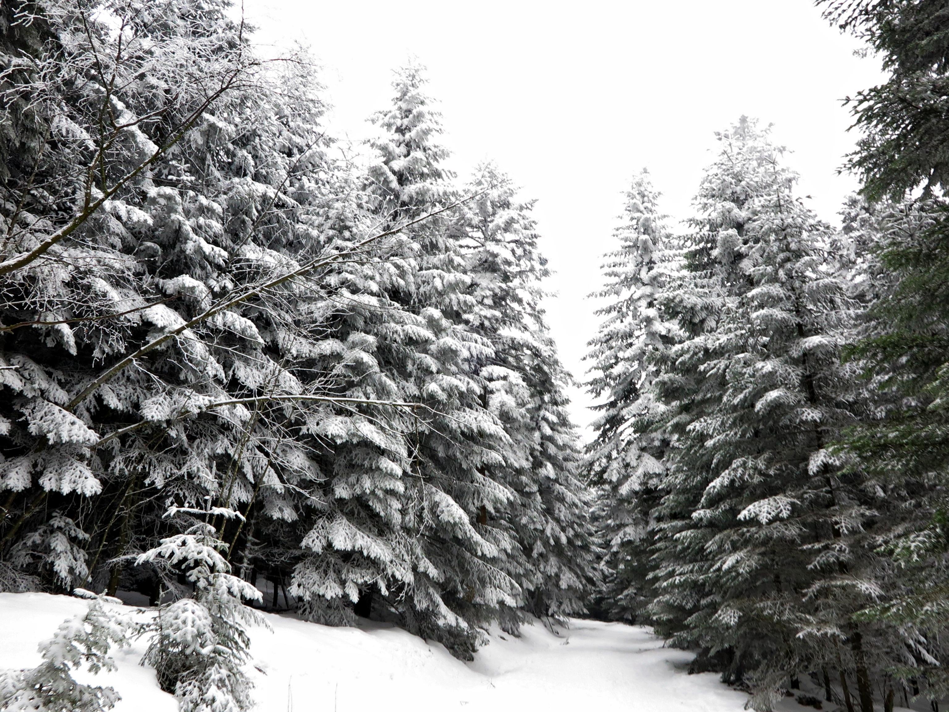 La neige à la Versanne, souvenirs…