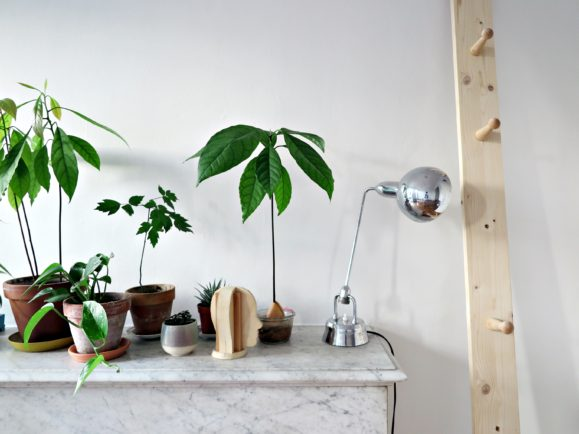 urban jungle appartement