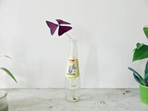 bouquet minimaliste oxalis