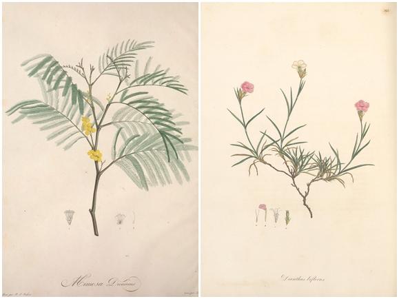 plantes dessins