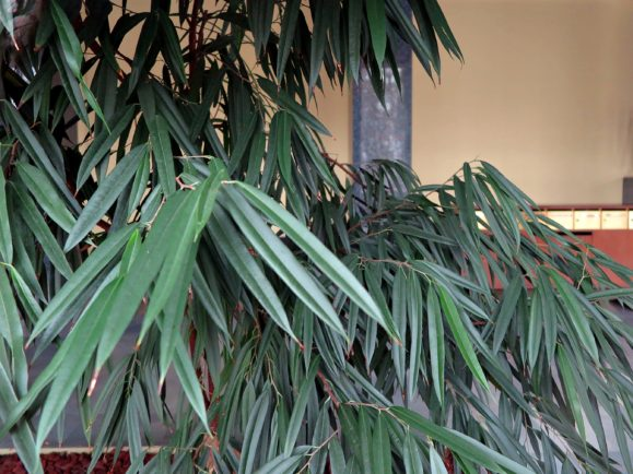 plantes vertes grande taille