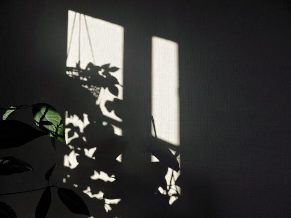 plantes d'intérieur ombres