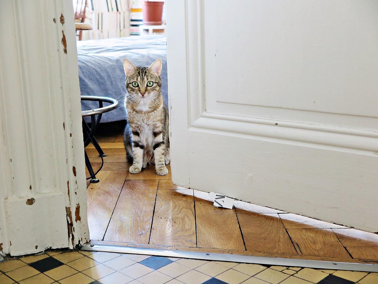 Une histoire de chat, d'antidote et d'instinct