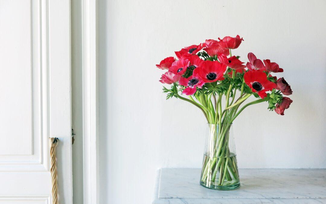 anémones en fleur